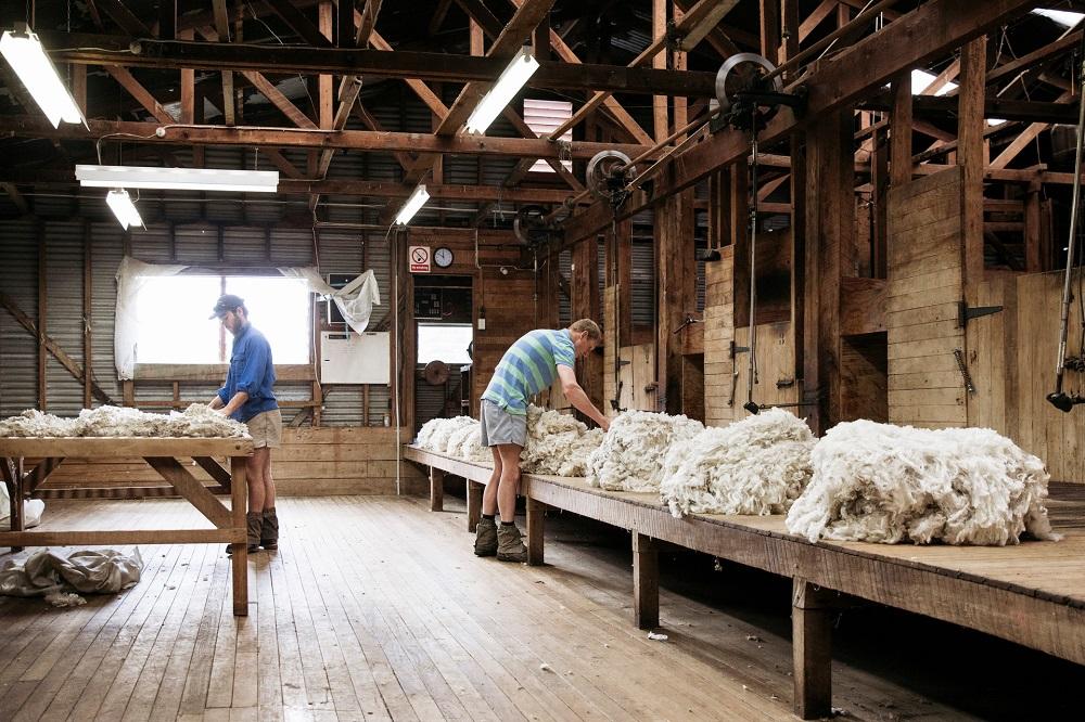 Devold-sheep-to-shop